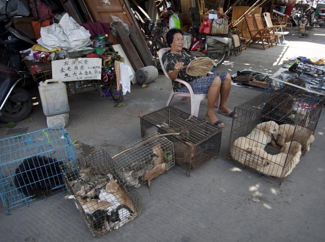 26062021 cani in cina